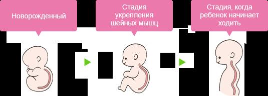 Новорожденный Стадия укрепления шейных мышц Стадия, когда ребенок начинает ходить